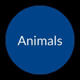ico-tariffa-animali-en